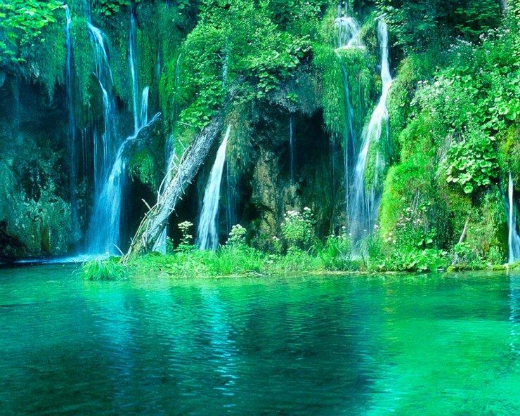 rainforest_paradise__by_rose_petals