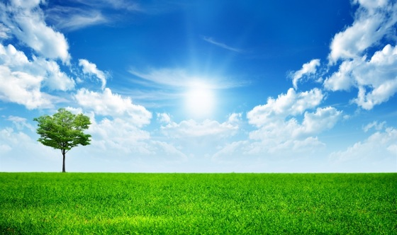 clean-green-grass-lanscape-with-clear-blue-sky-preview
