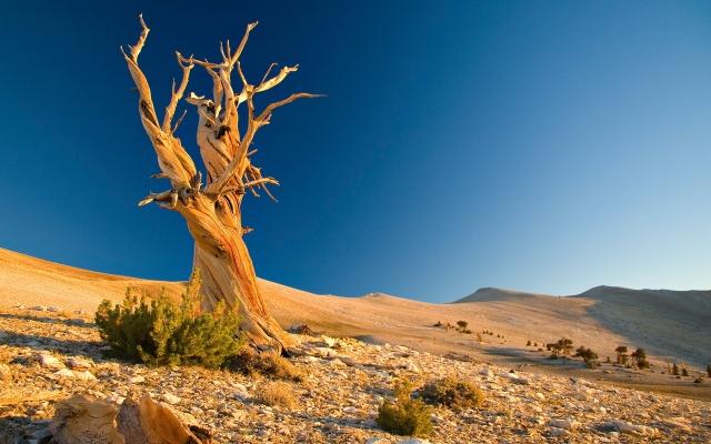 Nature_Desert_Dry_tree_in_the_desert_033065_